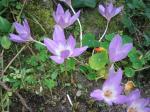 温泉地に咲く花
