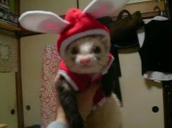 美羽ウサギ