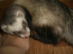 ママの腕枕