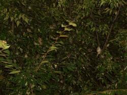 この~木なんの木?気になる木