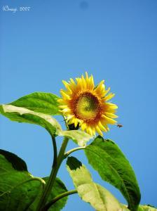SunF1