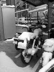 060121_snow3.jpg