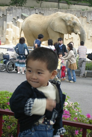象さんとつつじと