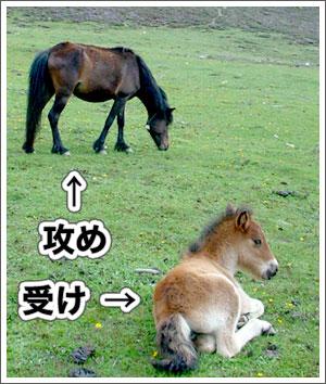 攻め、受け、馬二匹