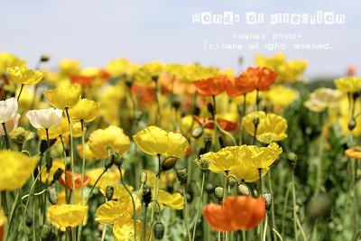 _MG_4532.jpg