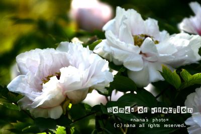 _MG_4607.jpg