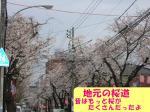 070331 地元の桜2