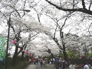 070401 桜トンネル