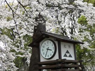 070401 時計と桜