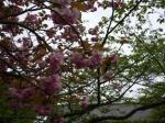070417 桜