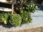 070914 外の植物