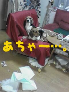 美鈴のあちゃ~