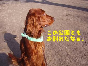アンディ最後の散歩01