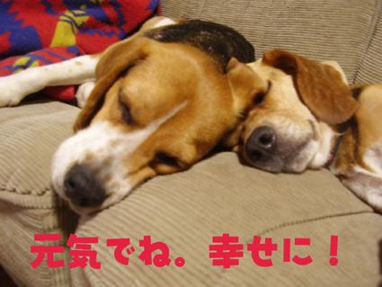 最後のおやすみ