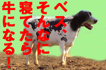 牛になるベス