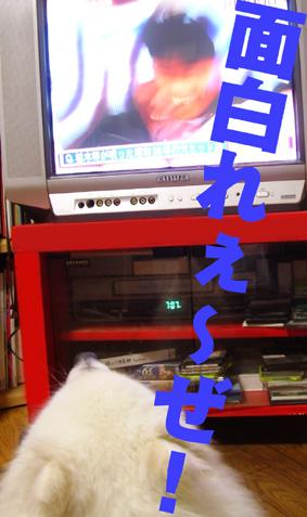 テレビを見るライチ