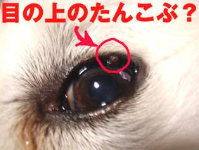 目の上のたんこぶ