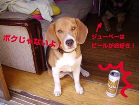 ピットとビール