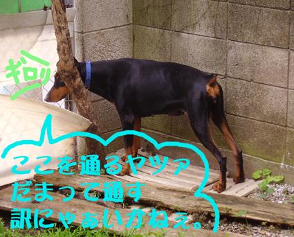 ガード犬ベルク