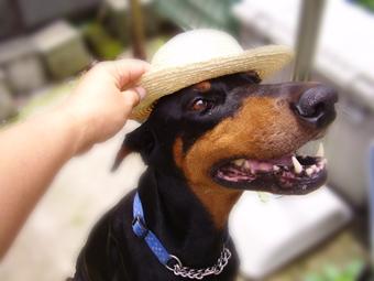 帽子かぶろうね