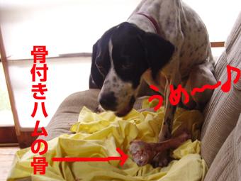 骨を食う犬