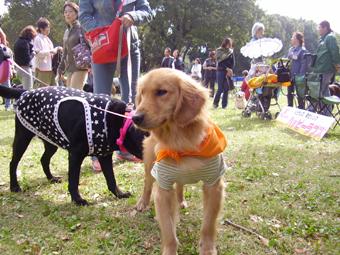 保護犬子犬
