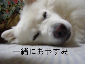 一緒におやすみ