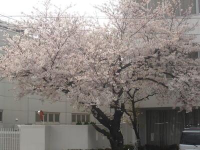 桜2007_01