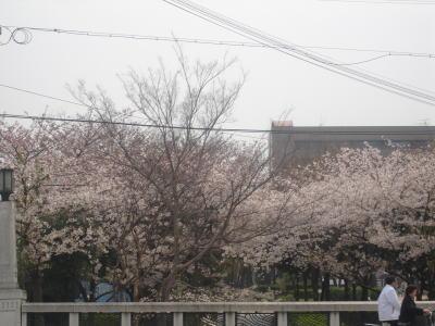 桜2007_02