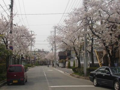 桜2007_03