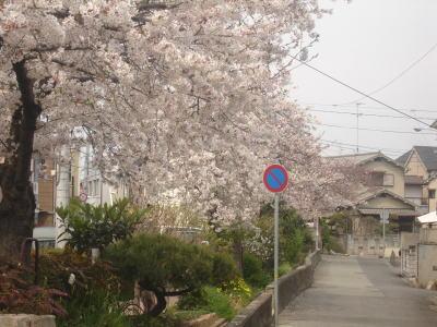 桜2007_04