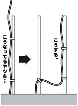 sinyuin001.jpg