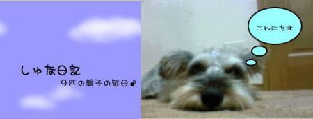 syuna2.jpg