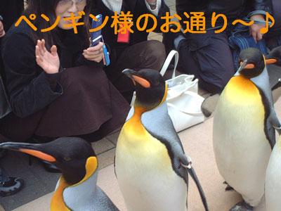 ペンギン@海遊館
