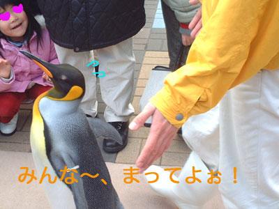 ペンギン@海遊館3