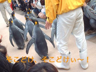 ペンギン@海遊館2