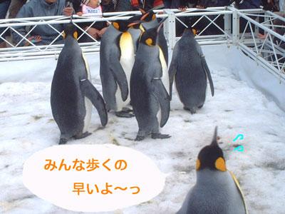 ペンギン@海遊館4