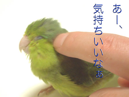 きゅうちゃん46