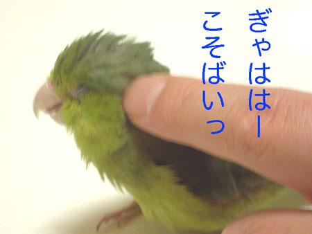 きゅうちゃん48