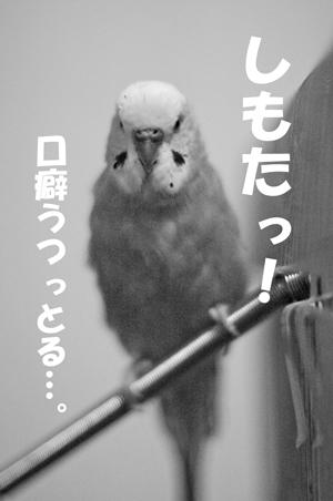 まぁくん 3