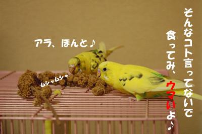 tumami3.jpg