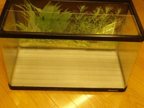 NEW60cm水槽