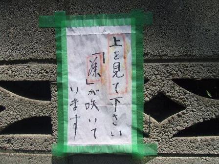 kagura4.jpg
