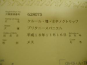 20070508230056.jpg