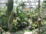 大きな温室