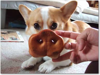 豚鼻が似合いすぎです