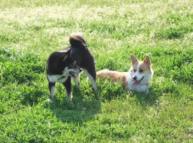 草原の2匹