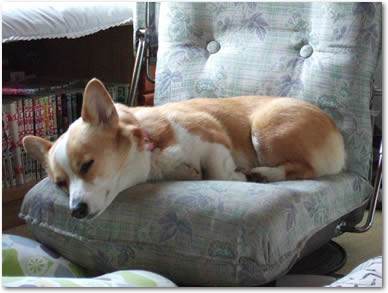 座椅子の寝心地はいかがかな