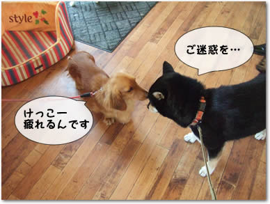 看板犬とチュ