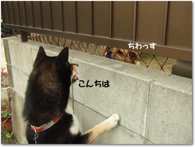 2006_05150069.jpg